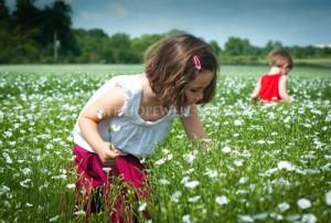 little girl in daisy field